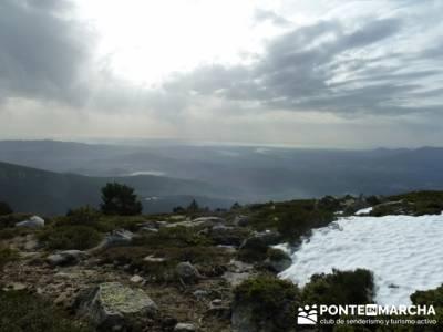 Ruta por el valle de Fuenfría, Siete Picos; tejo taxus baccata; arbol del tejo